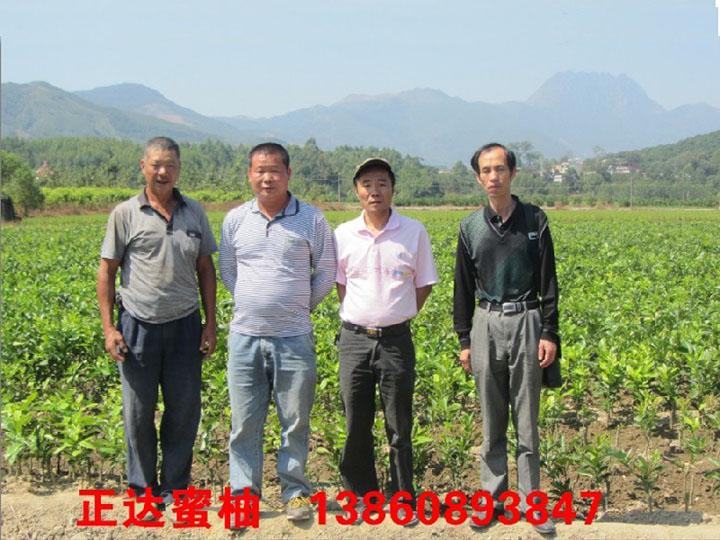 梅州红皮红肉柚子苗场销售丨红肉蜜柚苗哪里正宗丨哪里有卖红肉蜜柚苗