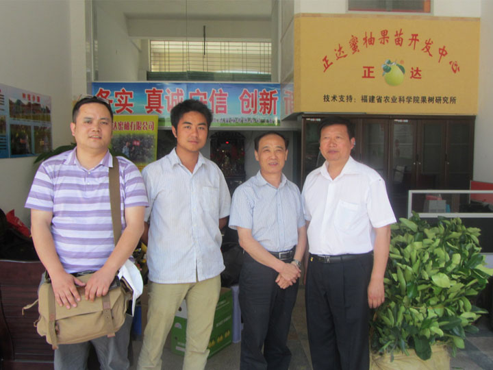 湖南客户到正达大三红蜜柚苗基地现场订购2千多棵大三红蜜柚苗