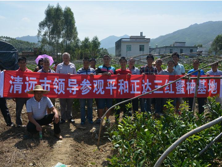 清远市领导到我司大三红蜜柚基地现场考察订购苗木