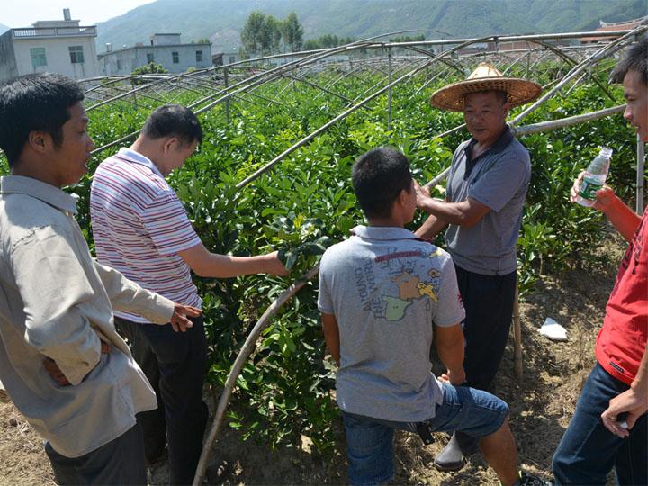 浙江客户到我司大三红蜜柚苗基地现场订购苗木学习栽培管理技术