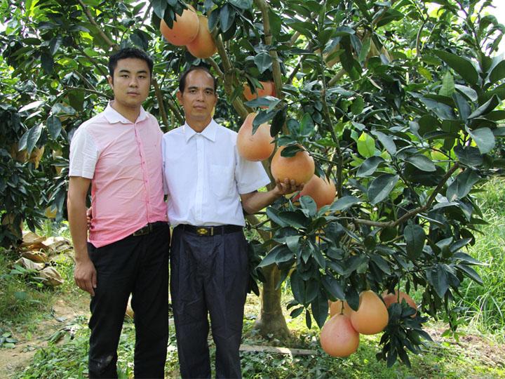 广西象州客户到我司大三红蜜柚果园基地考察