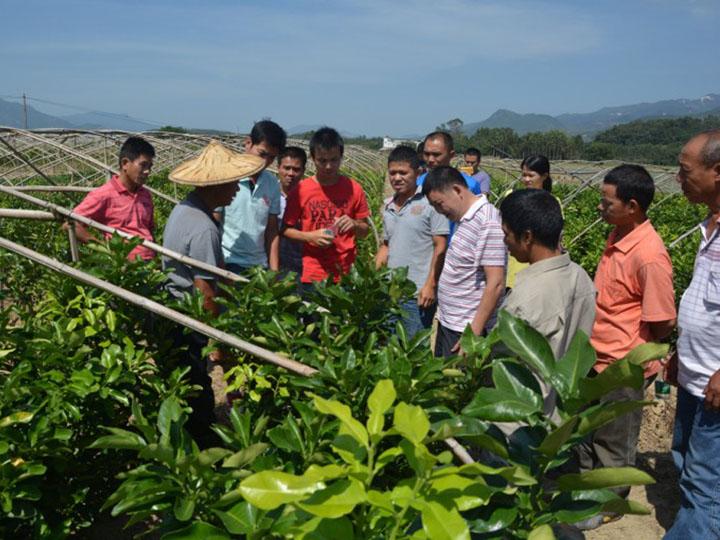 广东清远客户到我司大三红蜜柚苗基地现场学习购苗