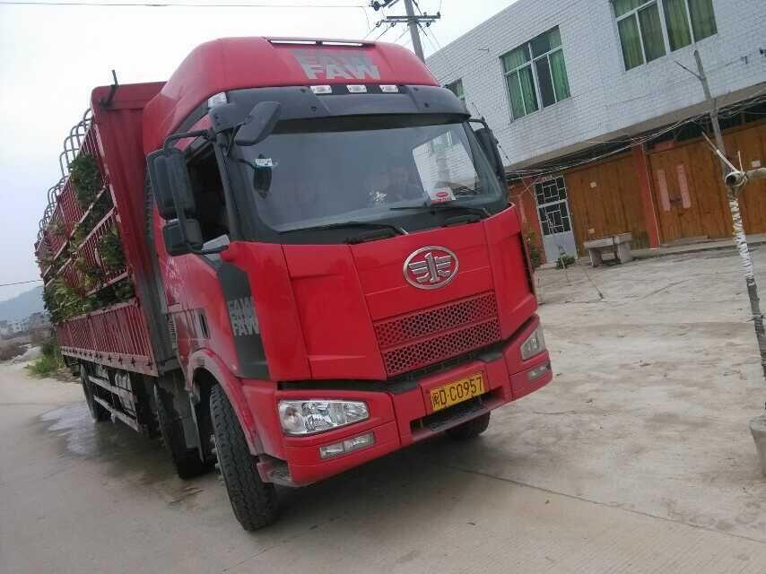 广西遵义客户订购的6万多棵大三红蜜柚苗准备发车