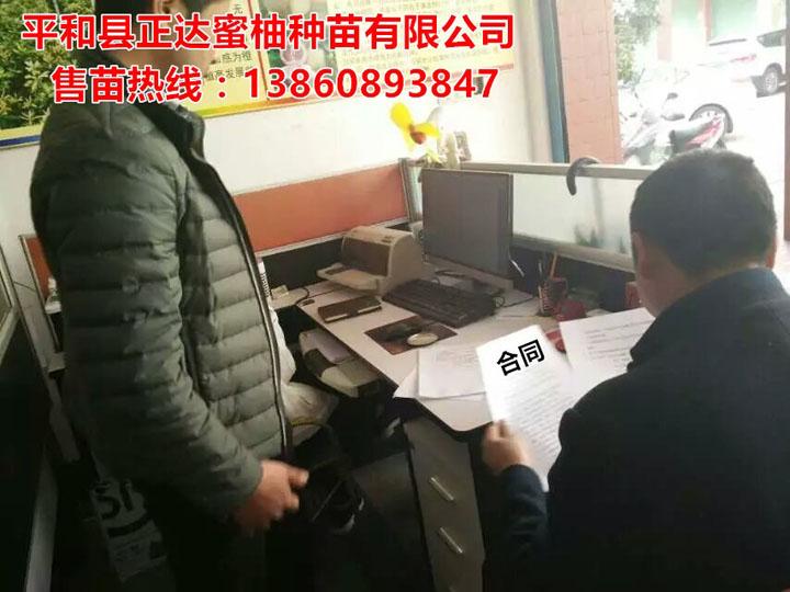贵州客户来我场订购2万多棵大三红蜜柚苗丨贵州哪里有三红蜜柚苗供应