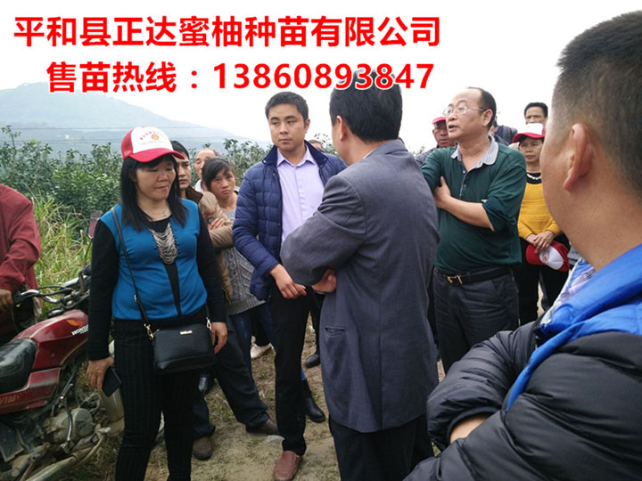 广东领导到我司大三红蜜柚基地现场考察学习购苗