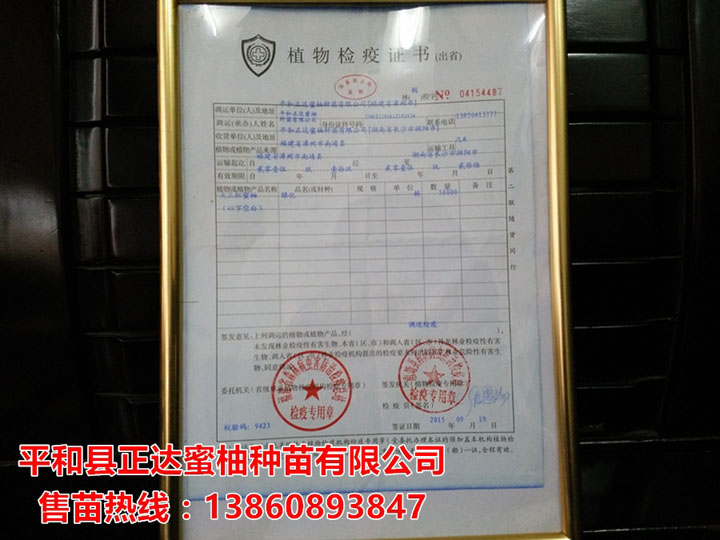 大三红蜜柚苗检疫合格证书