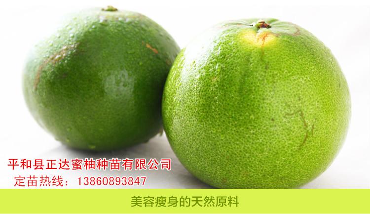 哪里有泰国青柚苗,台湾青柚苗,青柚苗适合哪些地区种植发展