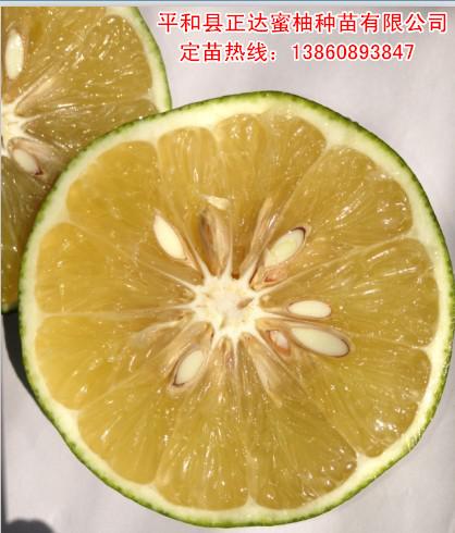 福建出售葡萄柚柚苗价格,甜葡萄柚苗批发