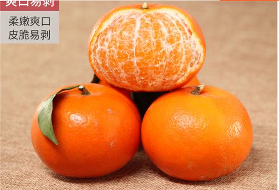 091无核沃柑苗适合哪些地区种植丨哪里有晚熟沃柑苗