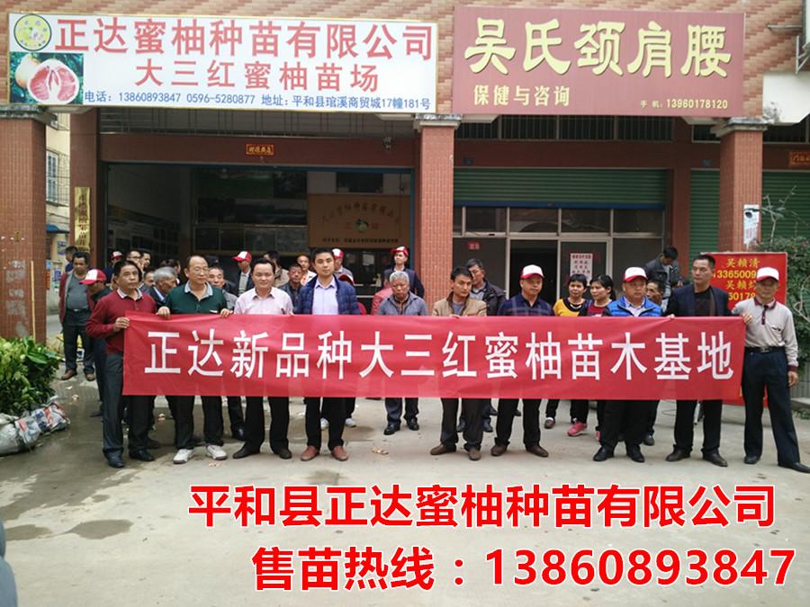 广东果农订购5000棵三红蜜柚苗木丨哪里能买到正宗大三红蜜柚苗丨广东红心蜜柚苗