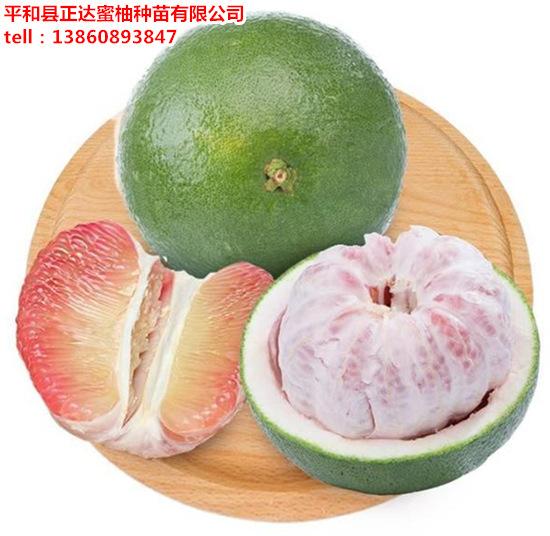 哪里有出售泰国青柚苗福建正宗泰国青柚苗