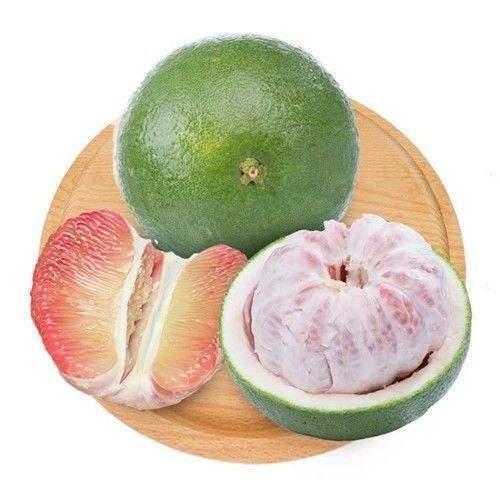 泰国翡翠青柚苗