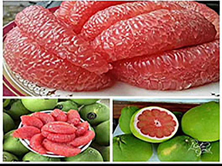 泰国红宝石青柚果苗